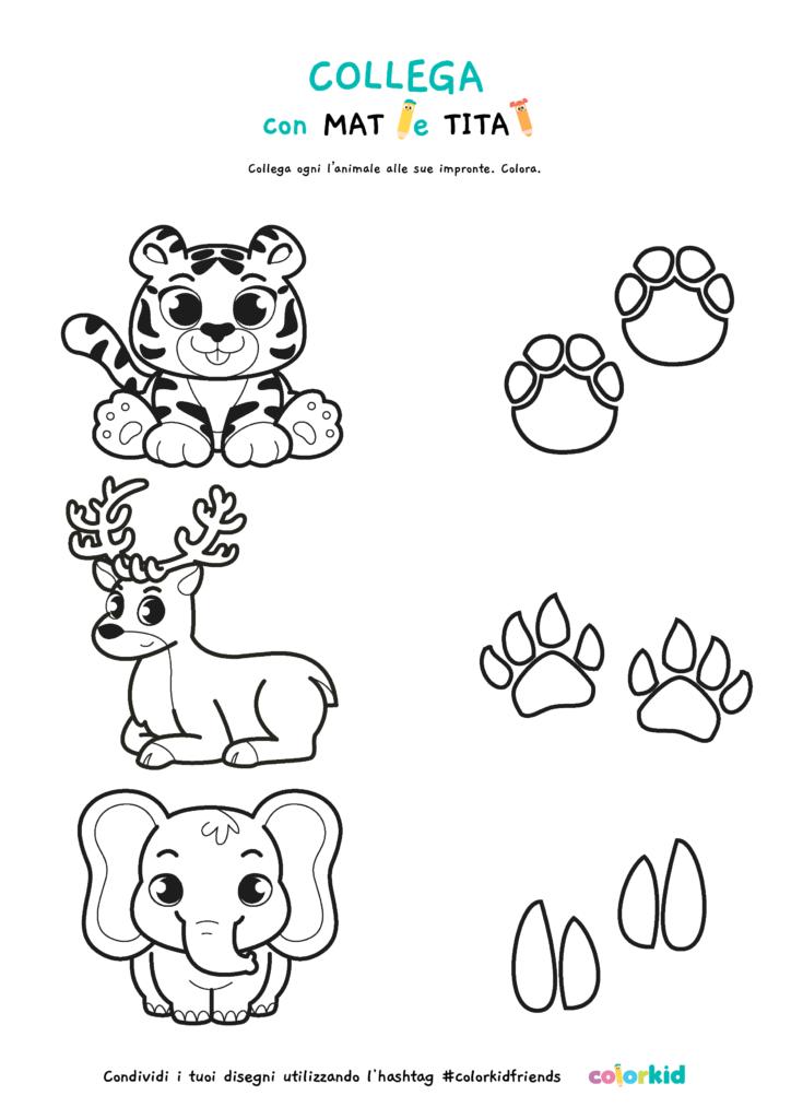 impronte animali